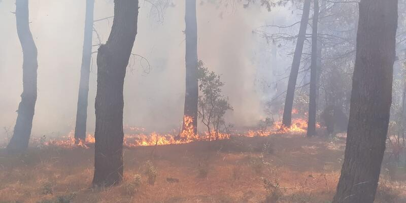 Son dakika... Aydos ormanındaki yangınla ilgili 1 kişi gözaltına alındı