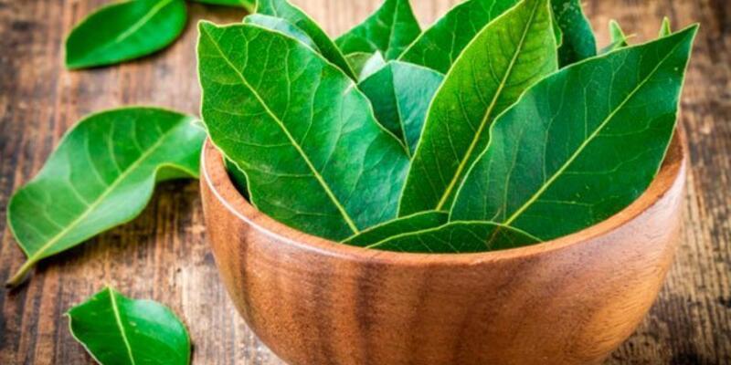 Defne Yaprağının Faydaları Nelerdir? Neye İyi Gelir? Defne Yaprağının Az Bilinen Faydaları