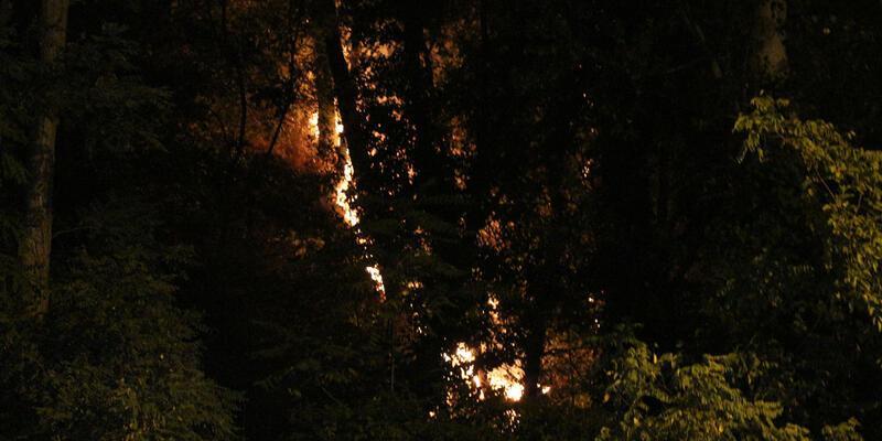Son dakika haberi... Emirgan Korusu'nda yangın!