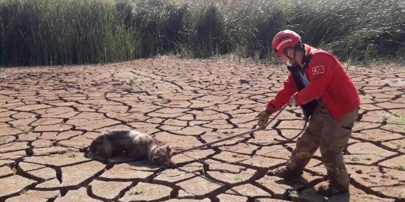 Son dakika... Bataklığa saplanan 2 köpeği itfaiye erleri kurtardı