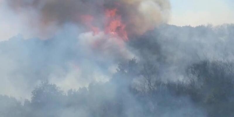 Son dakika... Gölcük'te orman yangını