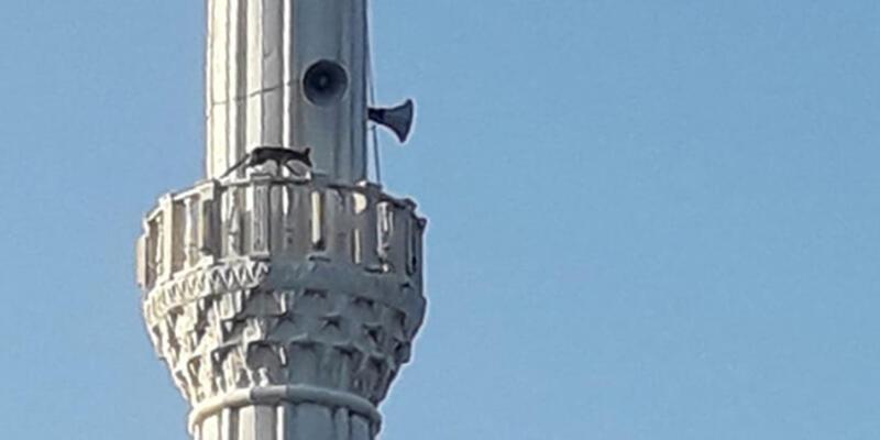 Minareye çıkan tilki görenleri şaşırttı