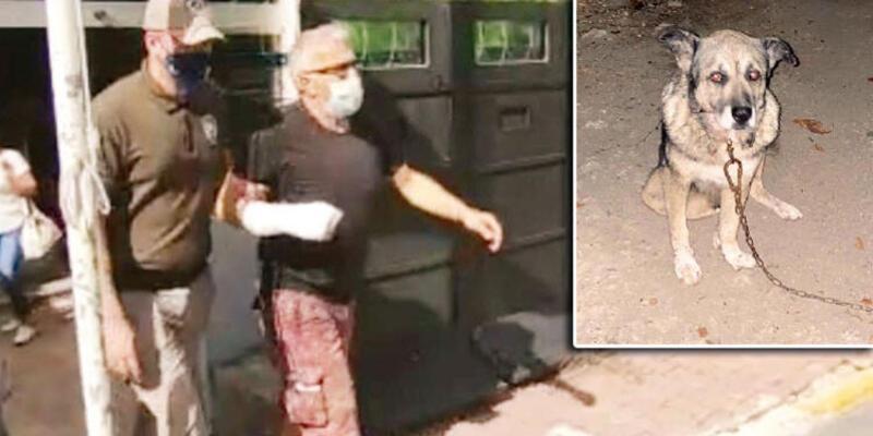 Komşu dehşeti! Köpek katili serbest kaldı