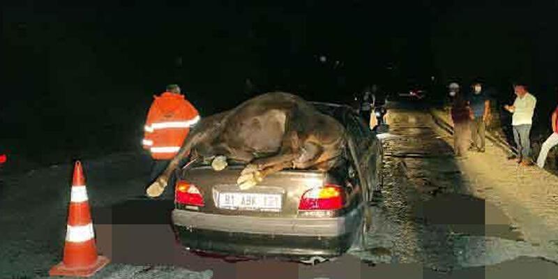 Çarptığı hayvan otomobilin bagajının üstünde kaldı