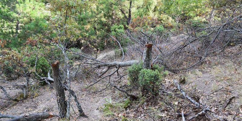 Bilecik'te izinsiz ağaç kesen kişiye para cezası