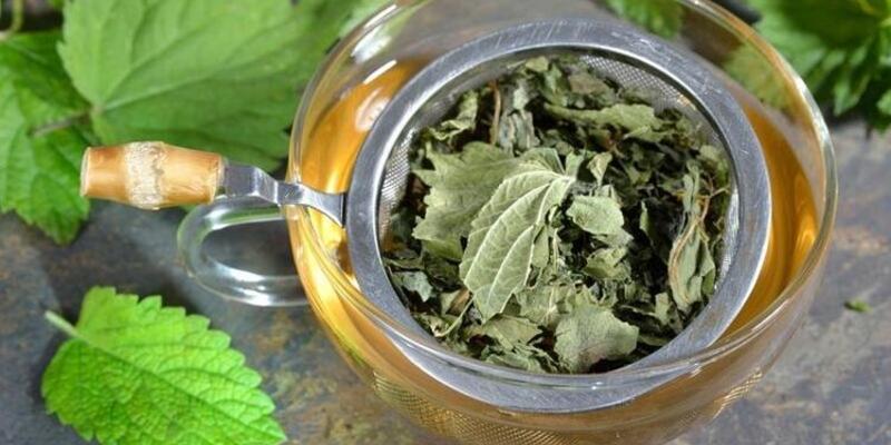Isırgan Otu Çayı Nasıl Yapılır? Isırgan Otu Çayının Faydaları Nelerdir? Neye İyi Gelir?