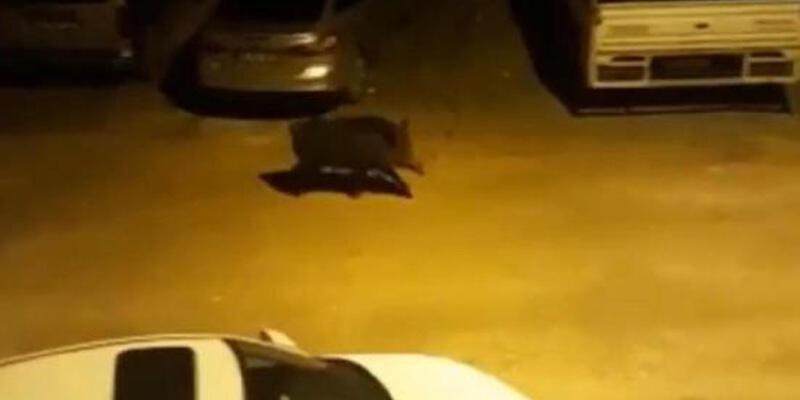 Hatay'da aç kalan yaban domuzu, kent merkezine indi
