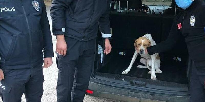 Sokak köpeğini sopayla döven kişi, gözaltında