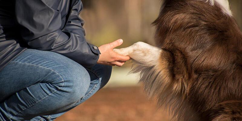 İspanyol akademisyenlerden koronavirüs analizi: Köpek sahipleri risk altında