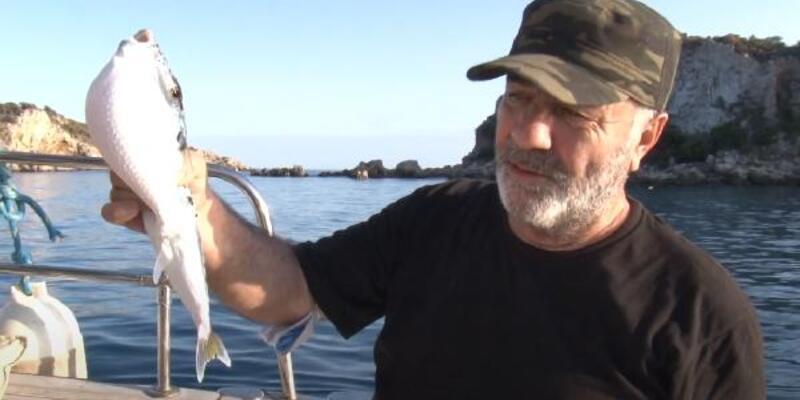 İstilacı zehirli balon balıkları Kuzey Ege'ye ulaştı