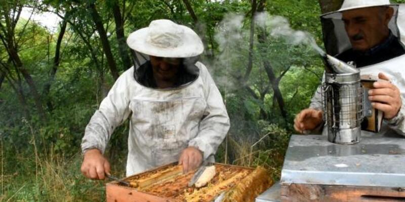 Türk arılarının gen haritası çıkarılıyor