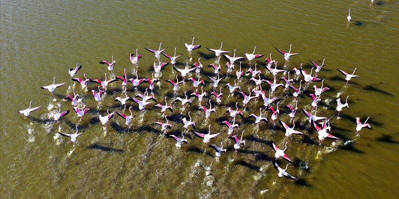 Tuzla Sulak Alanı'nda göçmen kuş akını yaşanıyor