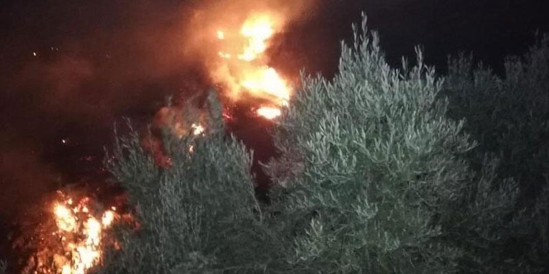 Hatay'da zeytinlik yangını 5 saatte kontrol altına alındı