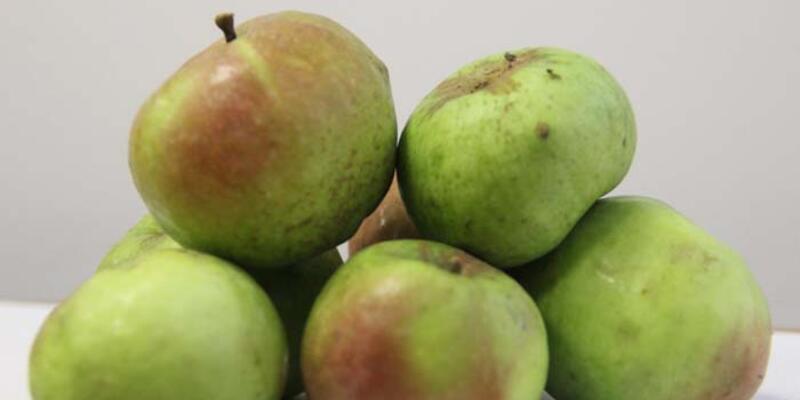 'Yomra elması' coğrafi işaret tescil belgesi aldı