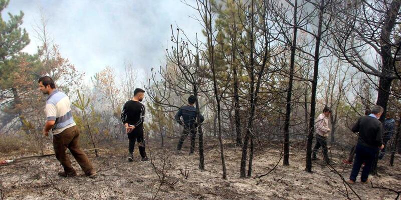 Kastamonu'da orman yangınları!