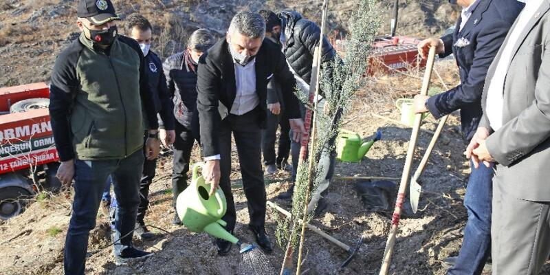 Beşiktaş Kulübü yanan ormanlara fidan dikti