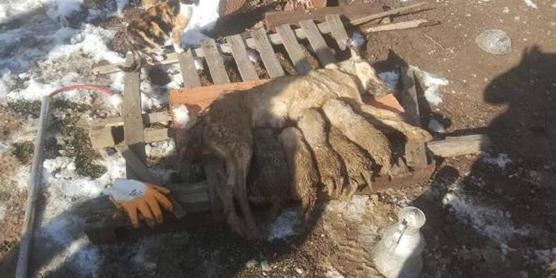 Enkaz altında kalan anne köpek ve 5 yavrusunu itfaiye kurtardı