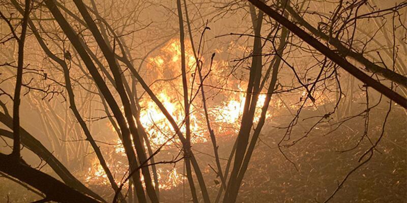 Düzce'de ormanlık alanda yangın!
