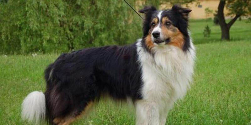 ABD'nin konuştuğu köpek! 5 milyon dolar miras kaldı
