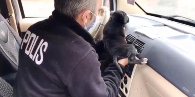 Polisler, üşüyen yavru köpeği ekip aracında ısıttı