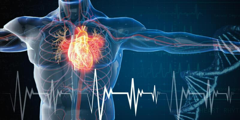 Kalp Damarları Hangileridir? Kalp Damarları İsimleri Nelerdir?