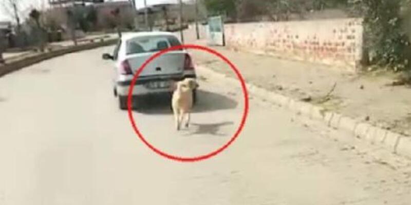 Köpeği iple otomobile bağlayarak çeken sürücüye para cezası