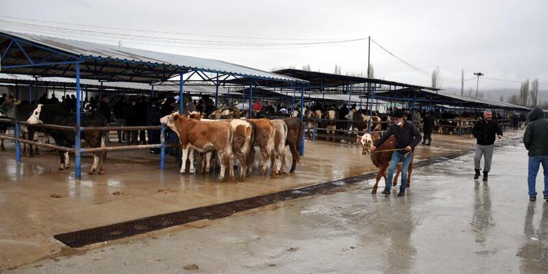 Çiçek hastalığı nedeniyle 70 gündür kapalı olan hayvan pazarı açıldı