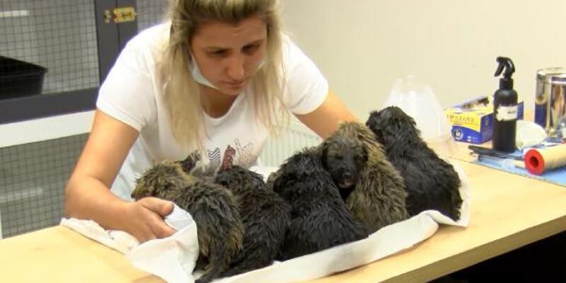 Foseptik çukurunda bulunan 6 yavru köpek tedaviye alındı