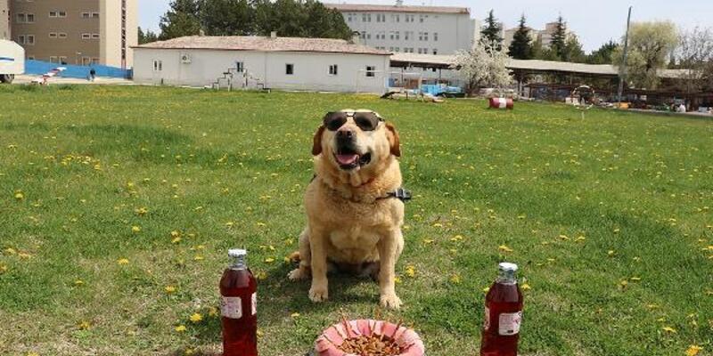 178 operasyonda görev yapan iz takip köpeği 'Hisar' artık emekli