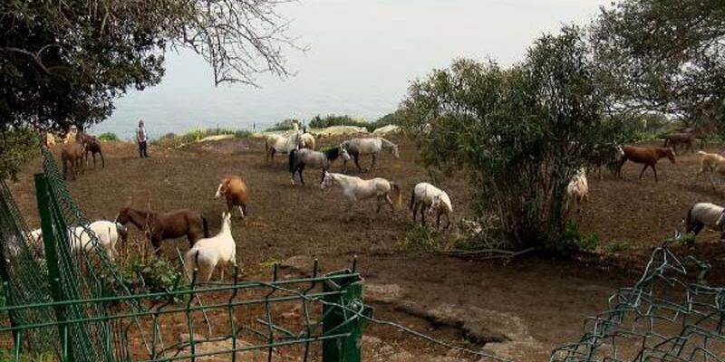 Kayıp atları savcılığa bildiren veteriner işleri müdürüne 'ihmal' soruşturması