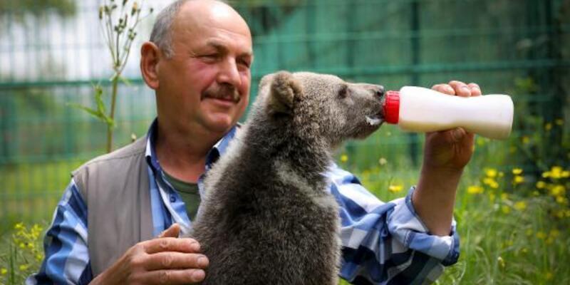 Bursa'da barınaktaki 3 aylık yavru ayı, biberonla besleniyor
