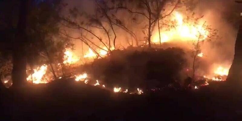 Bodrum'da orman yangını: Ekipler müdahale etti