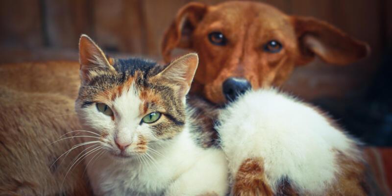 Köpeğe Dokunmak Abdesti Bozar Mı? Kedi Ve Köpeğe Dokunan Abdesti Bozulur Mu?