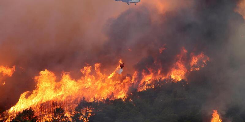 Orman kurtaracak çök önemli 43 kural