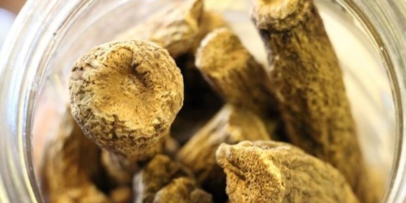 Udi hindi yağı nedir, faydaları neler? Udi hindi yağı nasıl kullanılır?