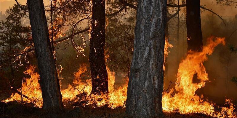 Orman yangınlarında Ege ve Akdeniz için kırmızı alarm
