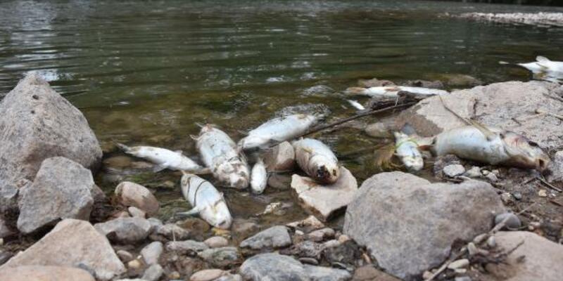 Kızılırmak'taki balık ölümlerine inceleme