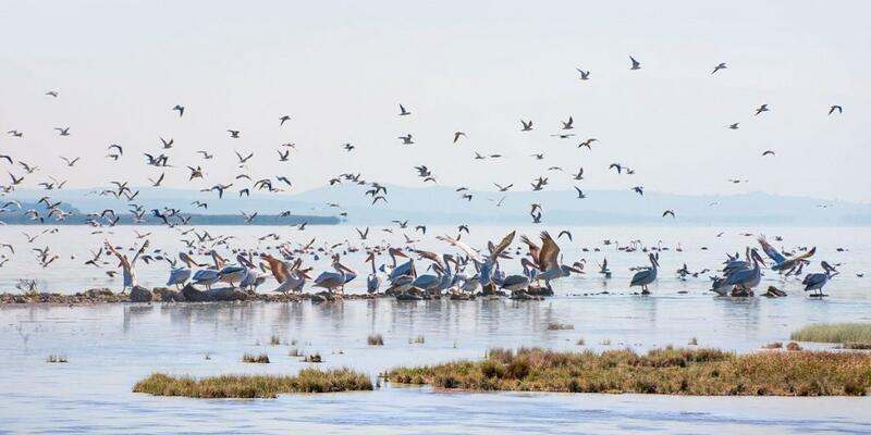 Kuş Cenneti Nerede, Nasıl Gidilir? Kuş Cenneti'nin Özellikleri Nelerdir, Ne Zaman Gidilir?