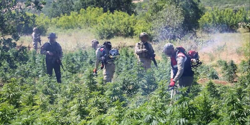 SON DAKİKA: Diyarbakır'da narko terör operasyonu! 7 milyon 270 bin kök kenevir...