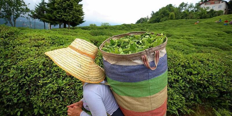ÇAYKUR'dan yaş çay alımlarına ilişkin açıklama