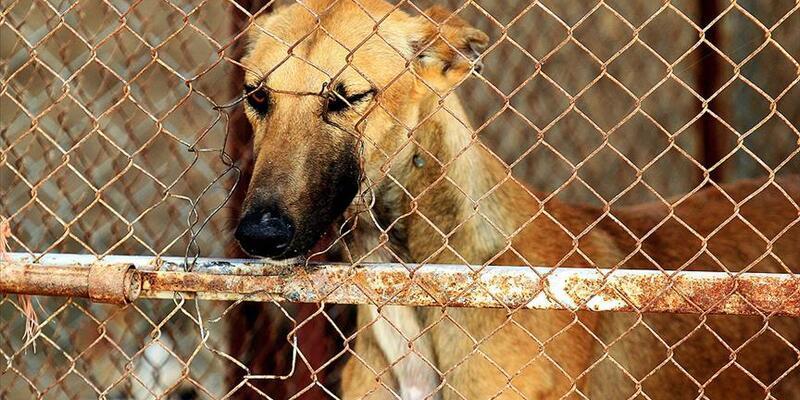 Save a dog bağışı nedir, bağış nasıl yapılır? Save a dog kampanyası ne için?