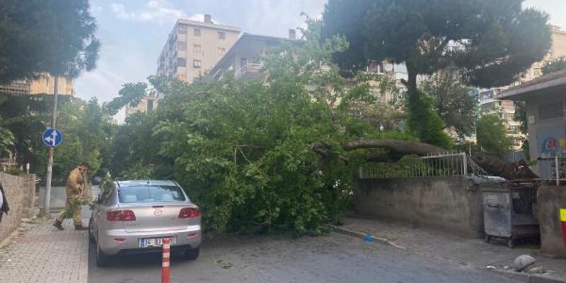 Kadıköy'de dut ağacı park halindeki otomobilin üstüne devrildi