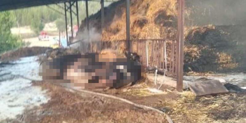 Ahırda yangın; 23 büyükbaş öldü