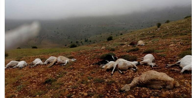 Giresun'da yıldırım düştü: 20 hayvan öldü