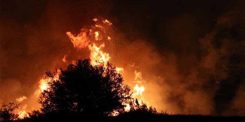 Adana'da tarladan ağaçlık alana sıçrayan anız yangını kontrol altına alındı