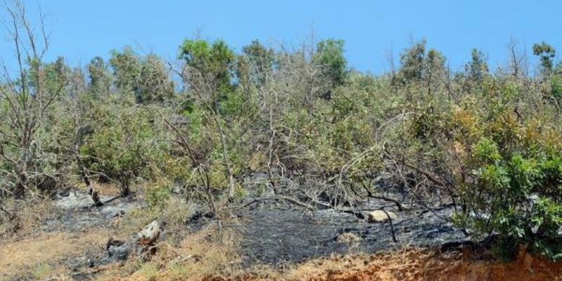 4 gün süren orman yangını kontrol altına alındı