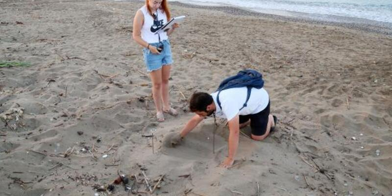 Belek sahilinde caretta yuvaları 2 bini aştı
