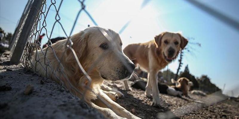 Son dakika: Hayvanları Koruma Kanunu maddeleri 2021! Hayvan Hakları Yasası kabul edildi mi?