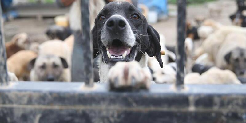 Hayvanları Koruma Kanunu belediyelere önemli sorumluluklar yüklüyor