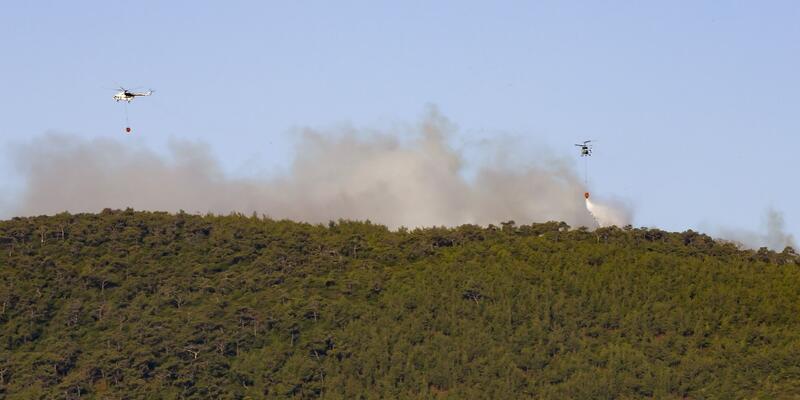 Son dakika... İzmir Foça'da orman yangını